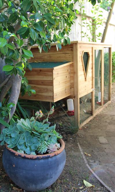 Backyard Chickens Coop : Our Backyard Chicken Coop  Simplified Bee