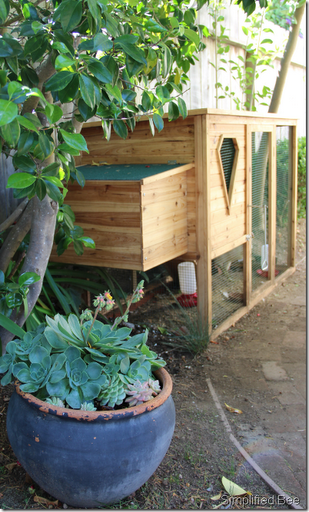 here is the coop built and in our backyard we hope it is secure