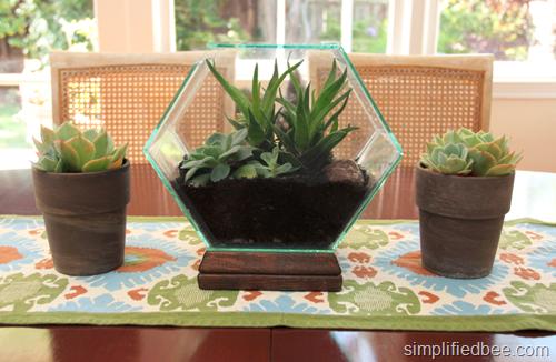 hexagon terrarium w succulents by simplified bee