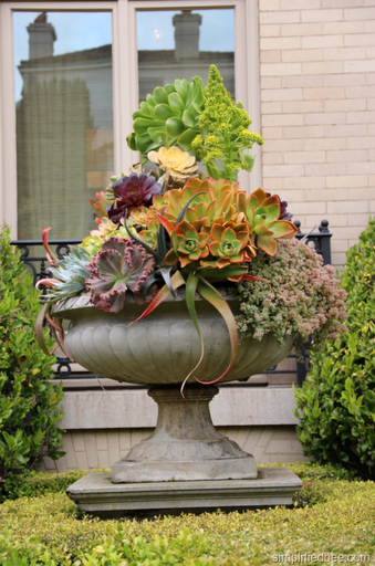 succulent_large_urn_planter