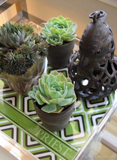 succulents on tray display