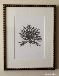 gray coral botanical art - simplified bee