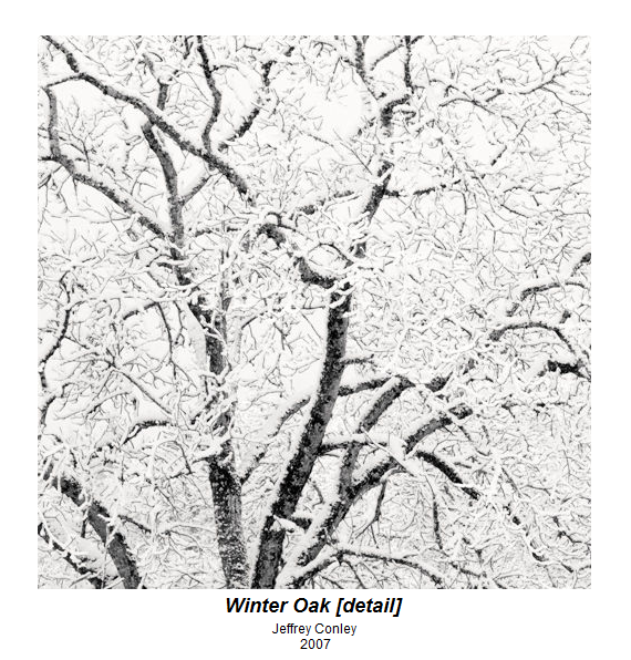 oak tree in winter snow