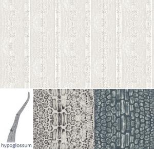 marine biology inspired fabrics