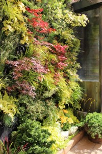live plant wall with Japanese maples