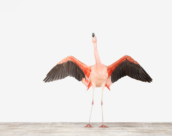 flamingo photography - the animal print shop