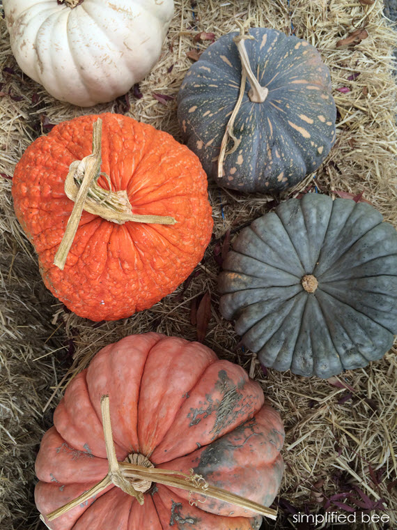 colorful pumpkins for fall // simplified bee