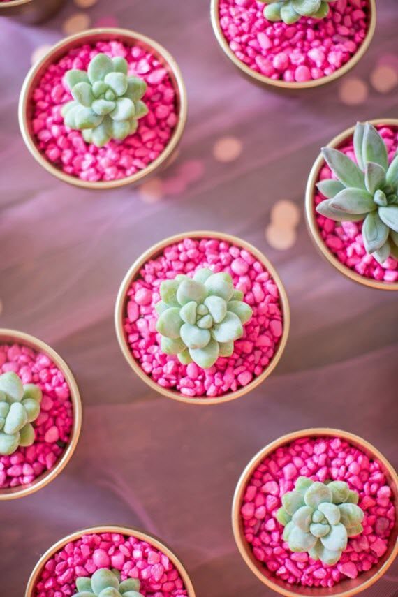potted succulents with pink rocks // Valentine's Day gift idea