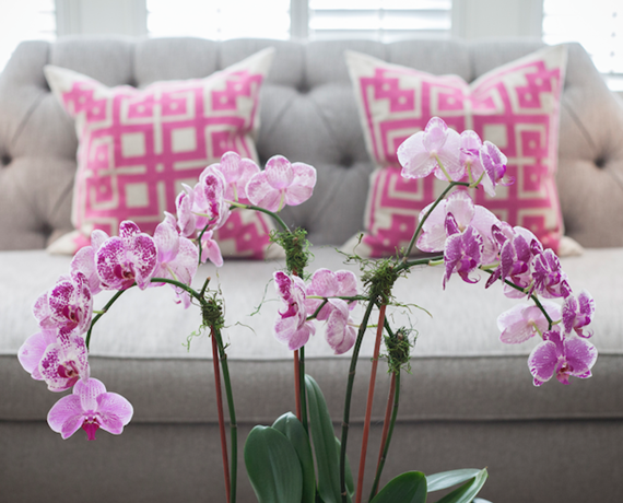 pink orchids // living room