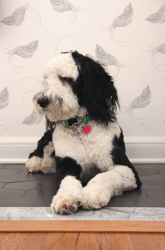 sheepadoodle // bathroom // @simplifiedbee