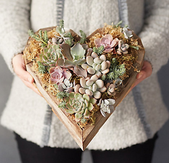 heart succulents
