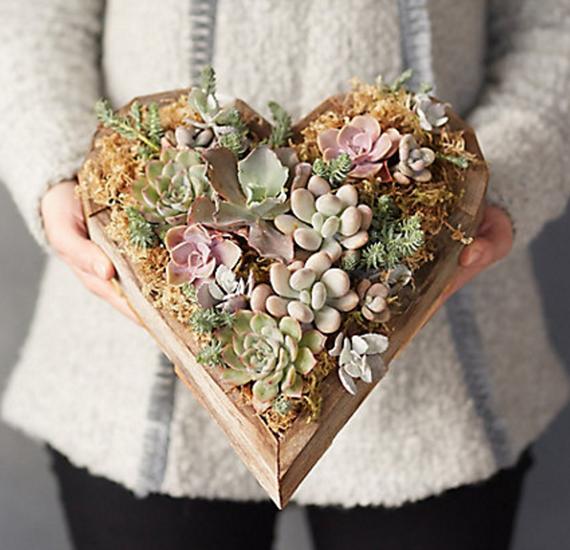 heart succulents