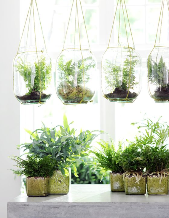 hanging fern terrariums