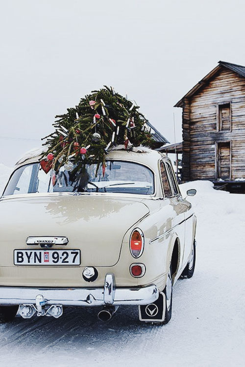 vintage car // christmas tree