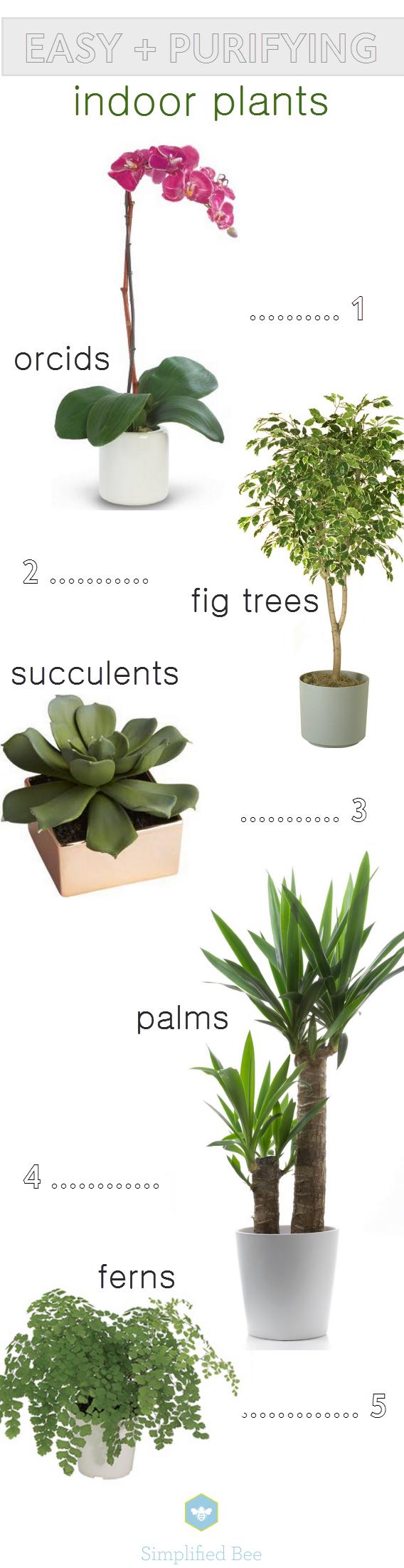 Easy Purifying Indoor Plants Www Simplifiedbee