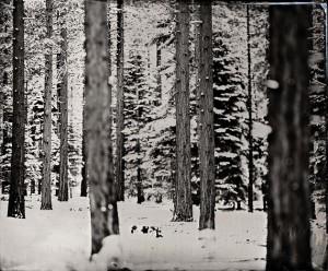 snow covered trees // Artist Ian Ruhter