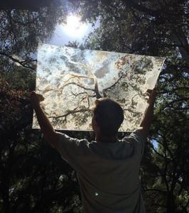 Oak Tree // Ian Ruhter // fine artist